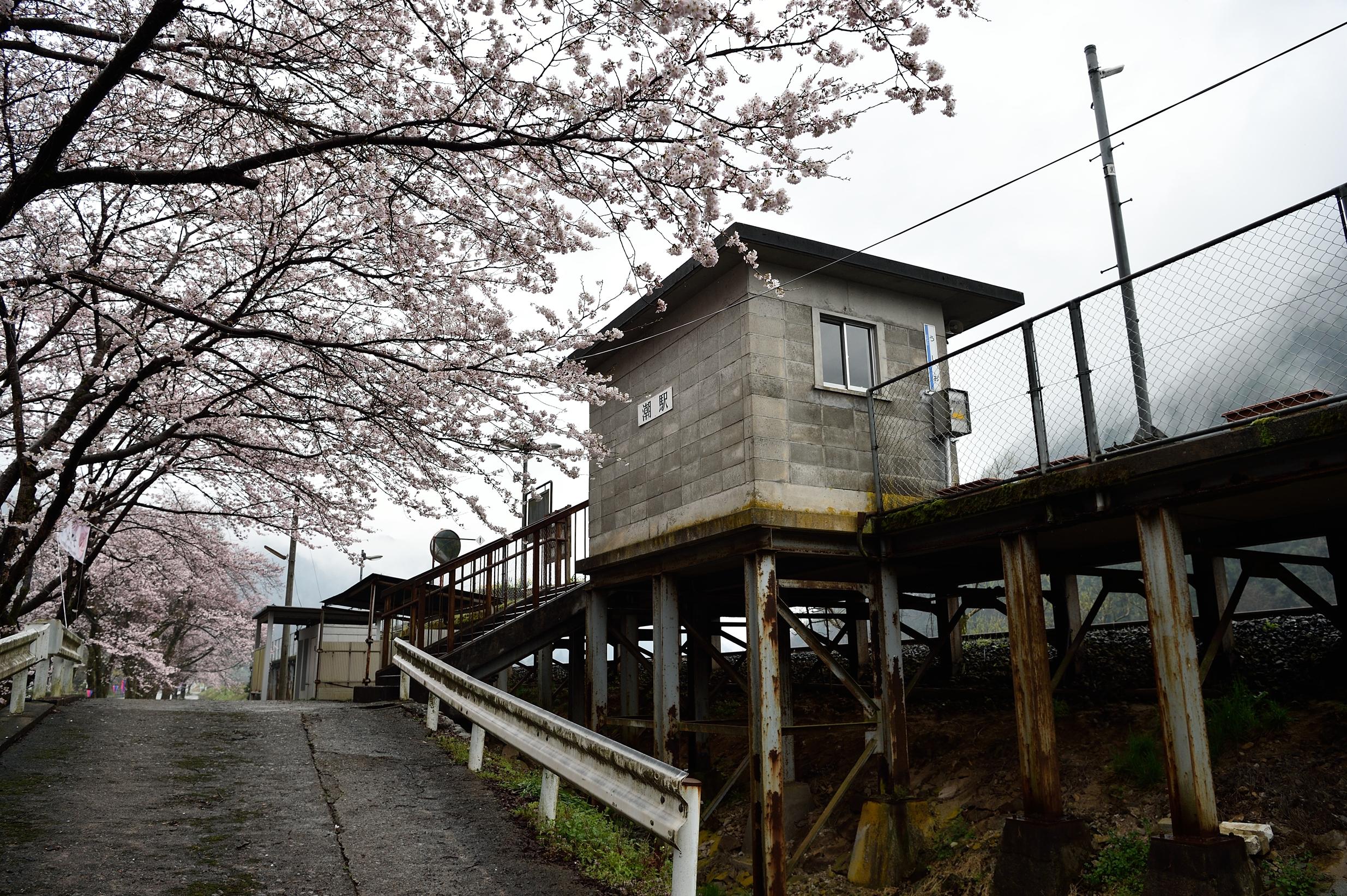 潮駅と桜1