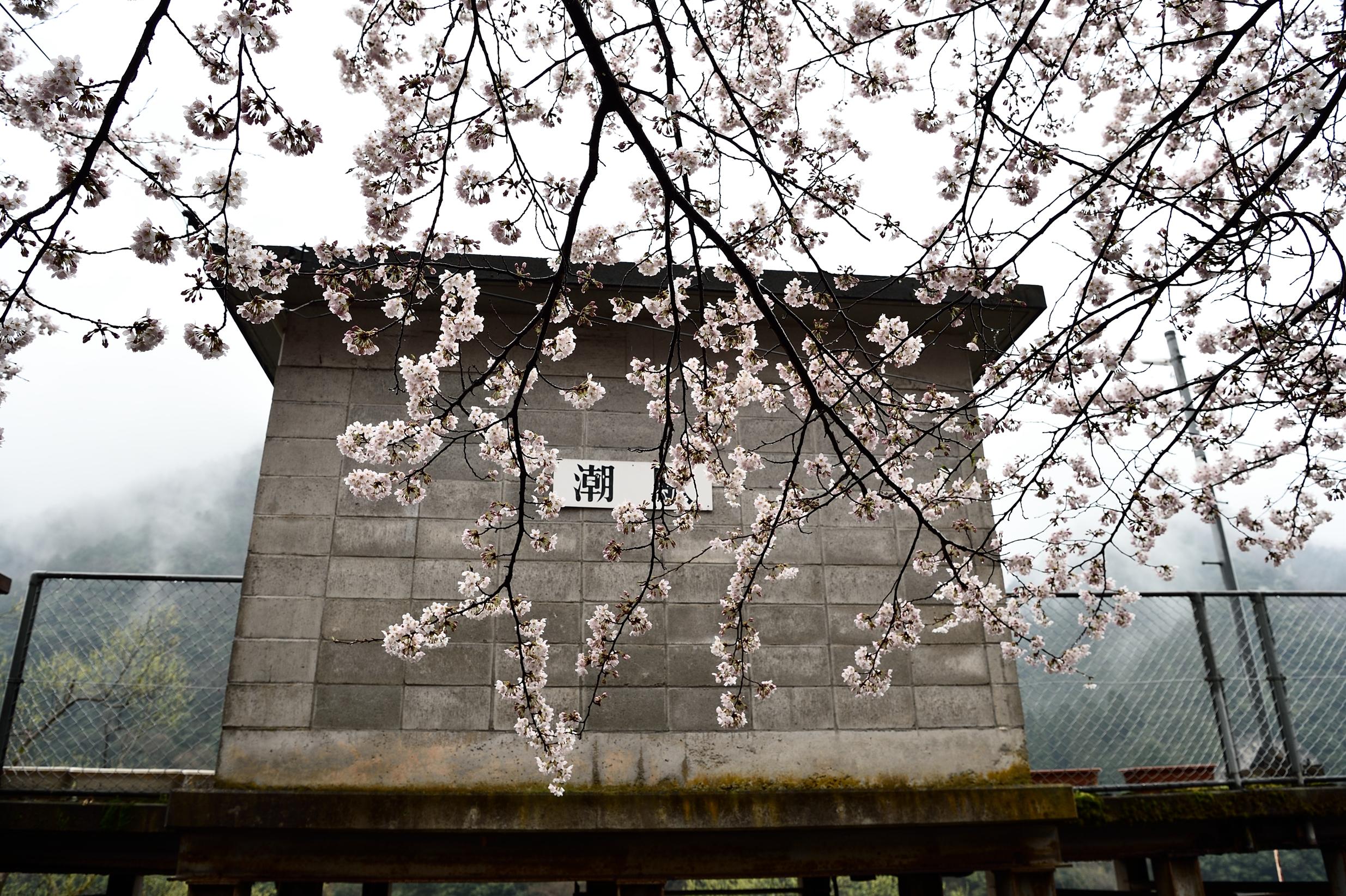 潮駅と桜2