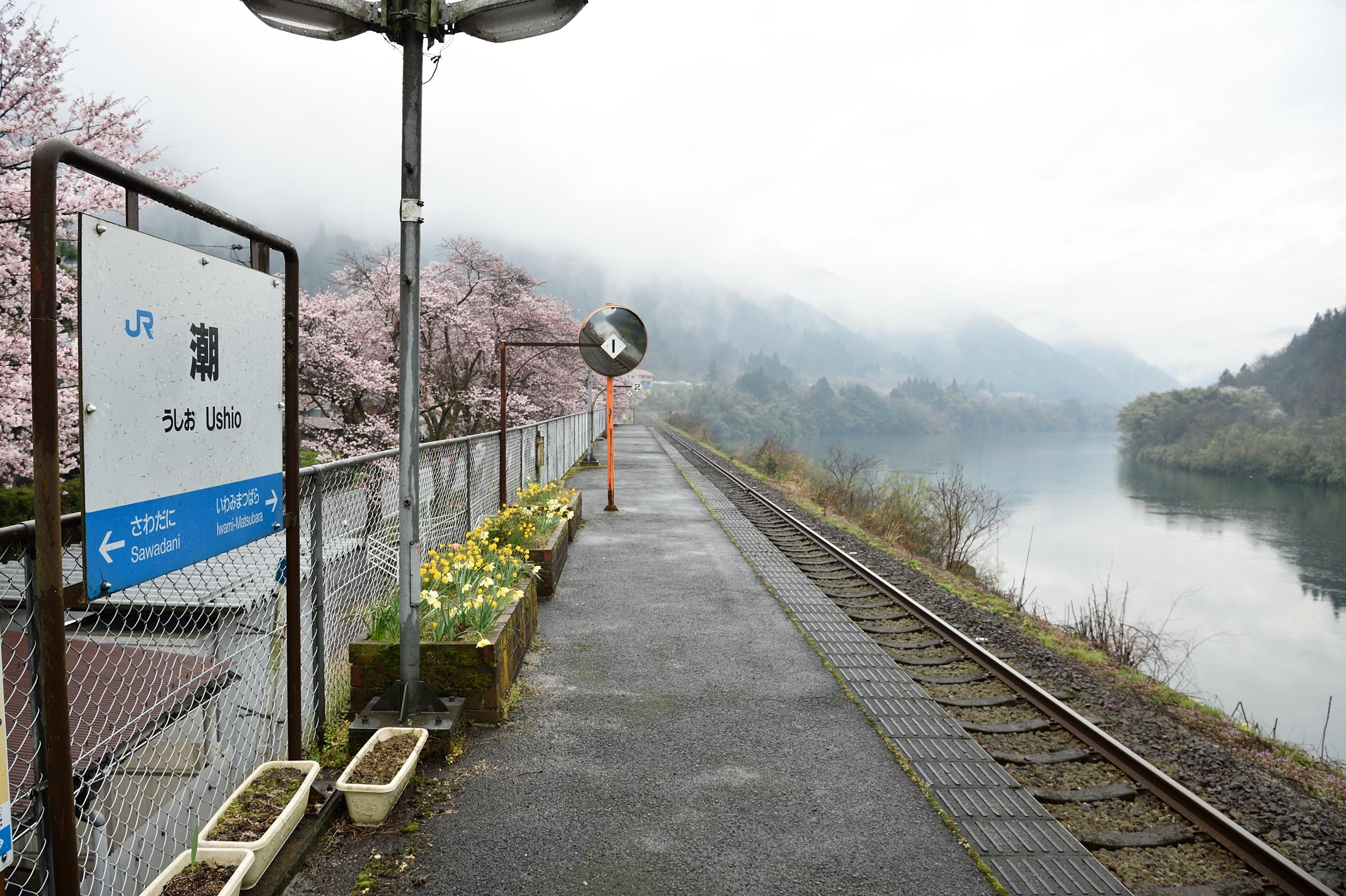 潮駅と桜3