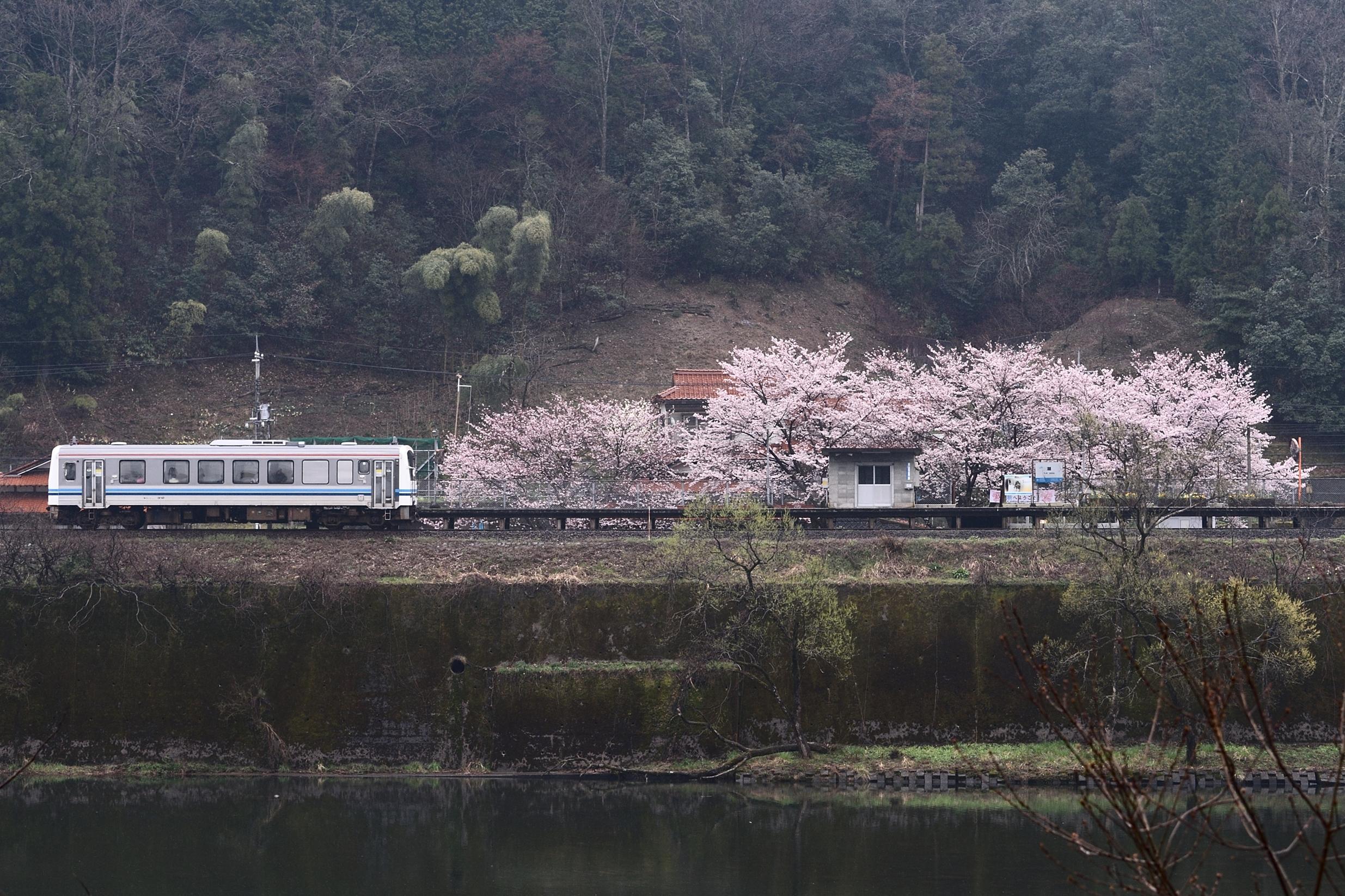 潮駅と桜6